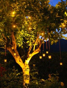 #wedding #amalficoast lemon trees hanging lights gorgeous