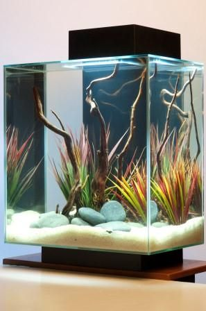 Click http://petproductsonline.info/fluvaledge12gallonaquarium to learn more about this Fluval Edge 12 Gallon Aquarium. Its striking 3D cube design is refreshingly new and revolutionary. EDGE is an eye-catching showpiece that stands out anywhere you put it. It includes LED lighting, so it makes a spectacular substitute for tabletop lamps. The Fluval EDGE is available in two sizes: a 6 gallon aquarium and a 12 gallon aquarium. Both models have been designed to capture emotion and serenity.