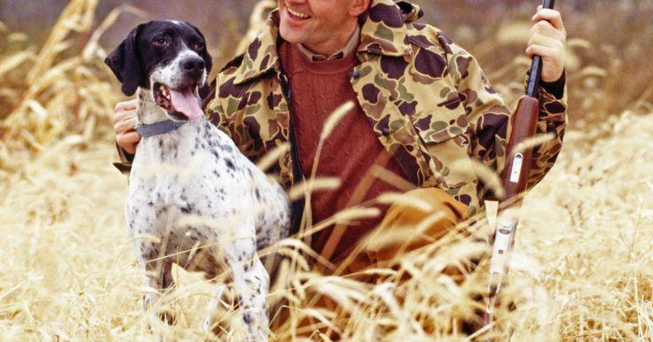 Cono treinar cães de caça sem a coleira de adestramento. Existem formas eficazes para treinar um cão de caça sem recorrer à coleiras de adestramento. Cães de caça são classificados pelo American Kennel Club sob o grupo desportivo: eles geralmente apresentam uma forte vontade de trabalhar com resistência e coragem. Quando a vontade de agradar é acompanhada por uma boa genética e métodos de treinamento ...