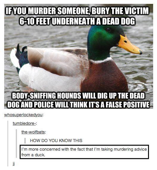 Taking murder advice from ducks...