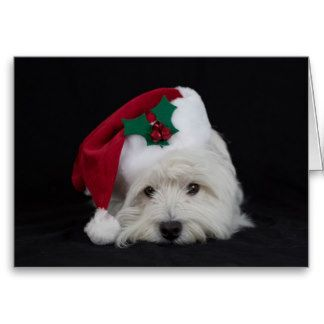 Dreamer The Pesky Westie Gifts -  Christmas Card