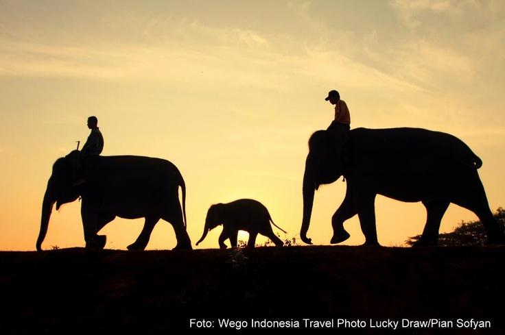 Way Kambas National Park, Lampung