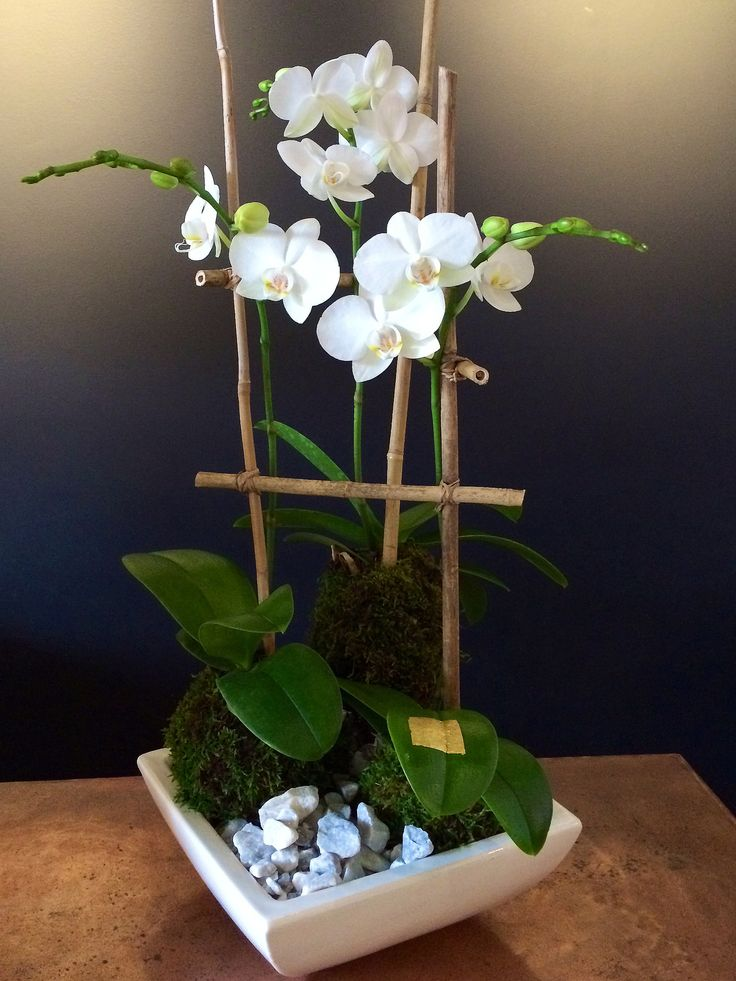 Decor - Triplet Orchid Kokedama Moss Ball - Bloom Couture - 1
