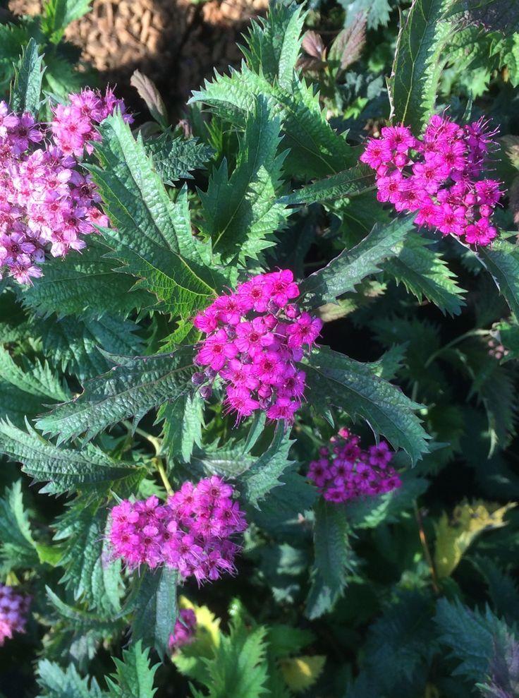 46 migliori immagini piante fiorite flowers su pinterest - Piante fiorite ...