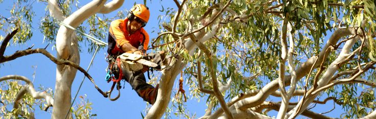 Commercial Tree Cutting Service – Get Help of the Experts #treecutting #services