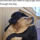 You have been visited by the doggo of hugs. Upvote in 1.34 seconds to receive doggo hug when you need it most. Bolly4u