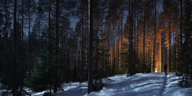 Night and forest (panorama)