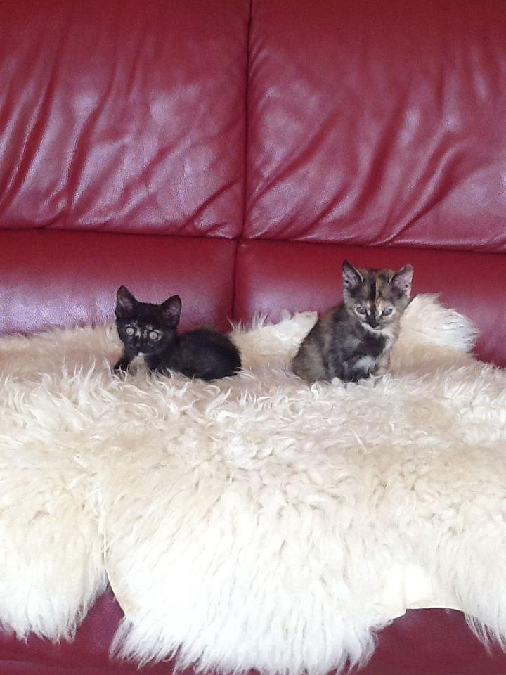 Ci sono salite da sole sul divano!