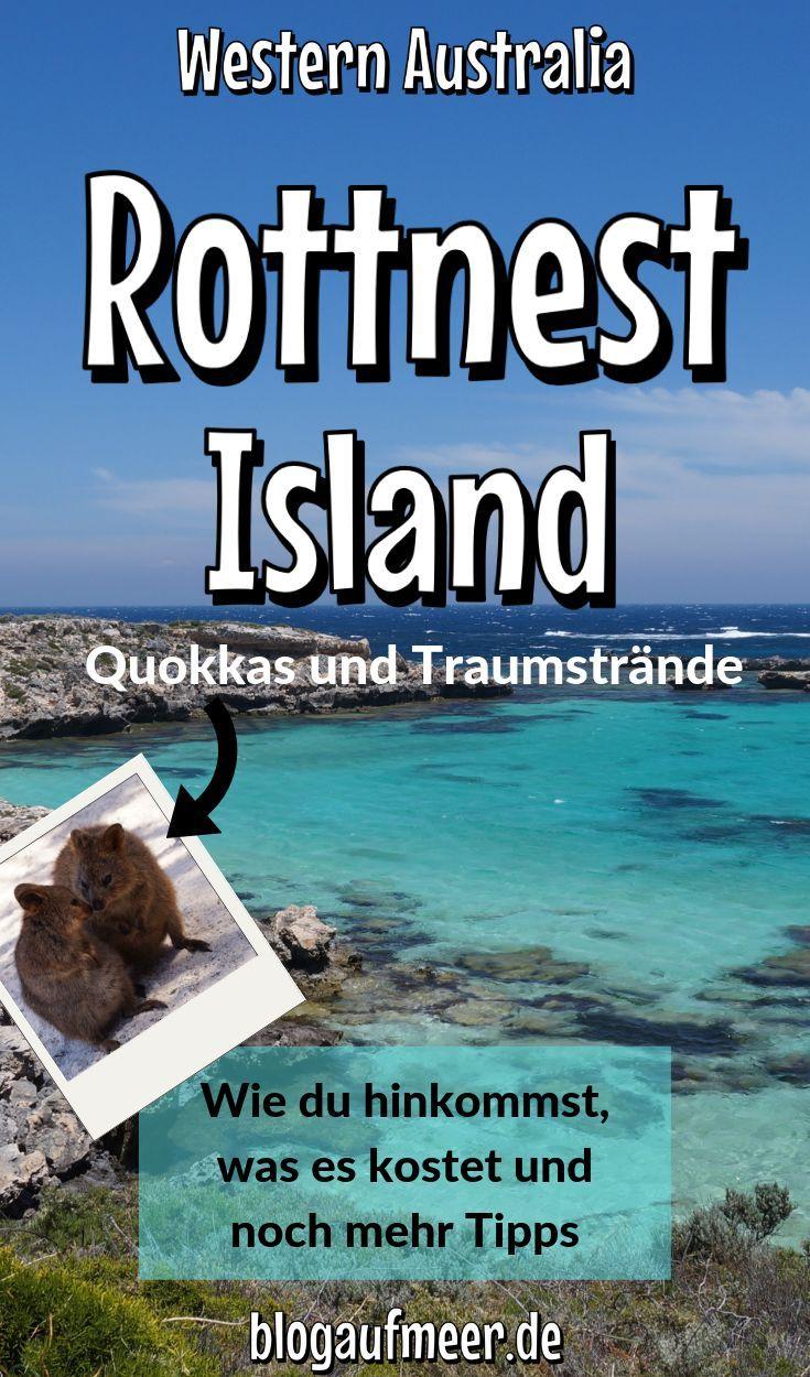 Begegne den Quokkas auf Rottnest Island (Australien