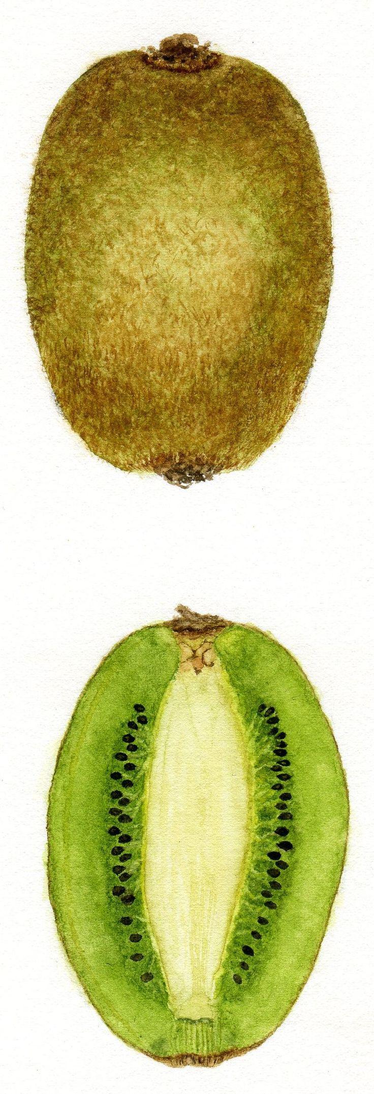 Kiwi © Jessica Frans