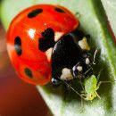 6 formas de atraer y mantener insectos beneficiosos a tu jardín o huerto ecológico | ECOagricultor
