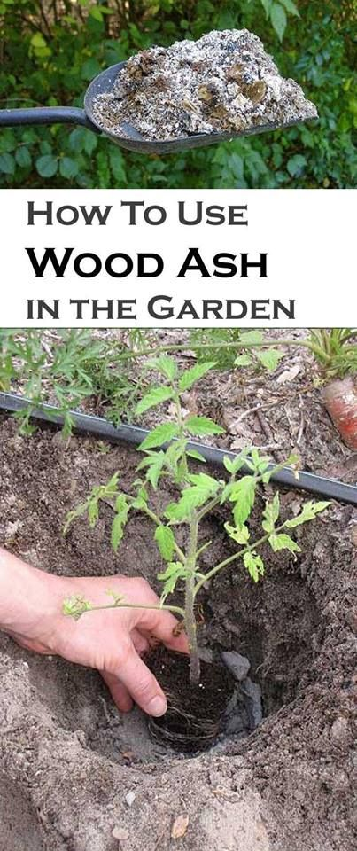The benefits of WOOD ASH in the garden