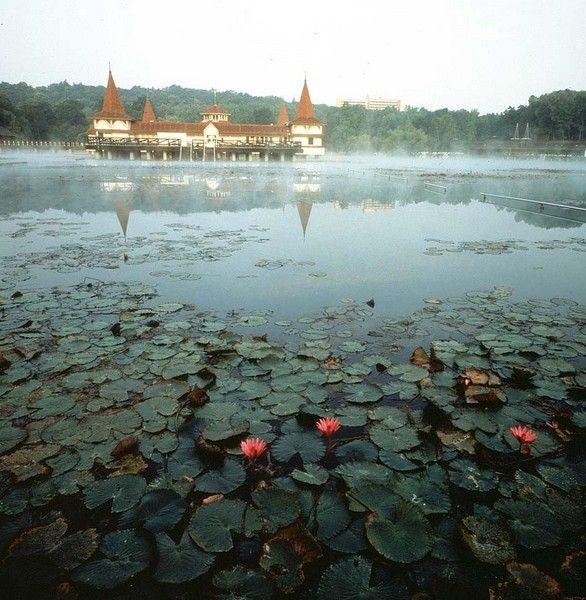 A világon is egyedülálló meleg vizű Hévízi-tó gyógyhatása meglehetősen ismert, kevesebb szó esik azonban arról, hogy magának a tónak és környékének milyen különleges az élővilága.