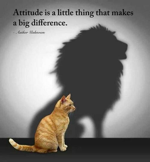La actitud es una pequeña cosa que marca una gran diferencia  -  Attitude is a little thing that makes a big difference