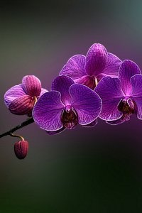 bridesmaids will wear a purple orchid behind one ear, will match dress nicely and look tropical