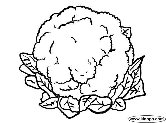 Grapefruit Coloring Page
