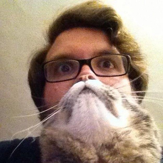 Der Katzenbart
