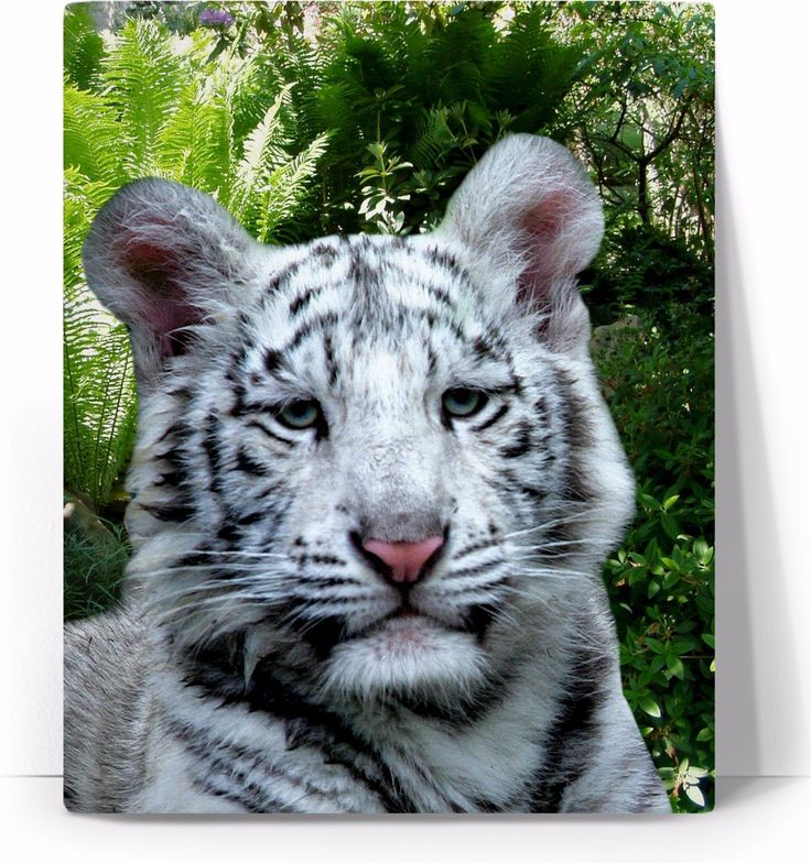 Check out my new product https://www.rageon.com/products/white-tiger-art-canvas-print?aff=BWeX on RageOn!