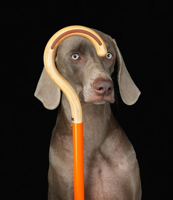 """#pets : Omhu is Danish and means """"with great care"""".  The company claims that life is  imperfect and beautiful. I agree. I really like their colourful walking canes. Simple and practical. More of this please. The pictures taken by William Wegman are via Omhu webpages. #1"""