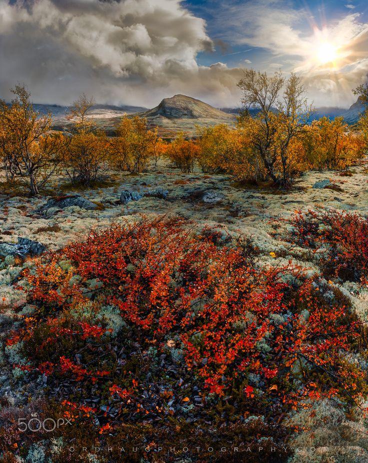 Autumn bliss--Dørålen, Rondane National Park, Norway by Dag Ole Nordhaug on 500px