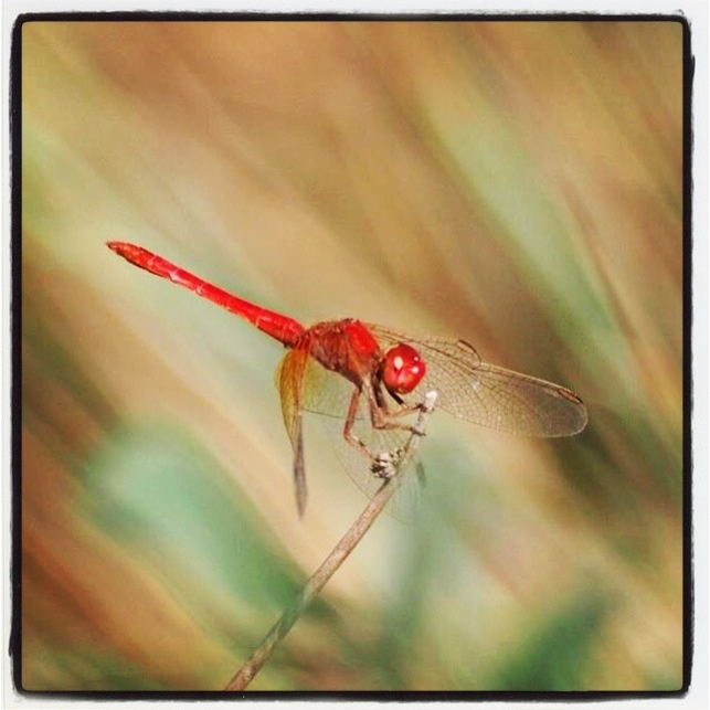 Close up of the dragonfly