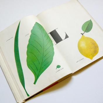 Bruno Munari ABC, 1960
