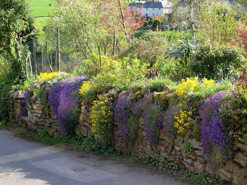 1000 images about aubretia on pinterest spring for Flower wall garden