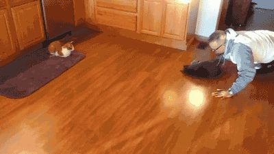 The newest Olympic category: Cat Curling...