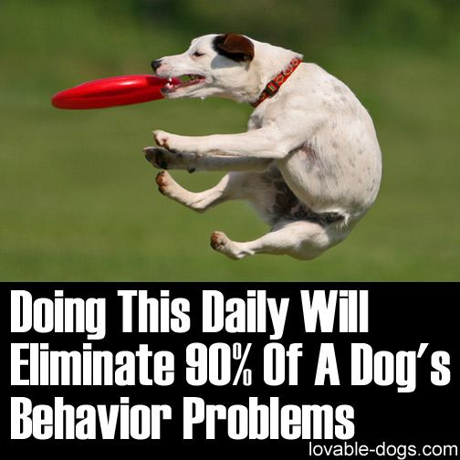 Please Share This Page: Photo © Cerae – fotolia.com Are you searching for answers on how to control your dog, especially in times of extremely hyper behavior? Have you tried different options but have yet to get the perfect one to properly discipline your dog? You can try various types of solutions but sometimes you …