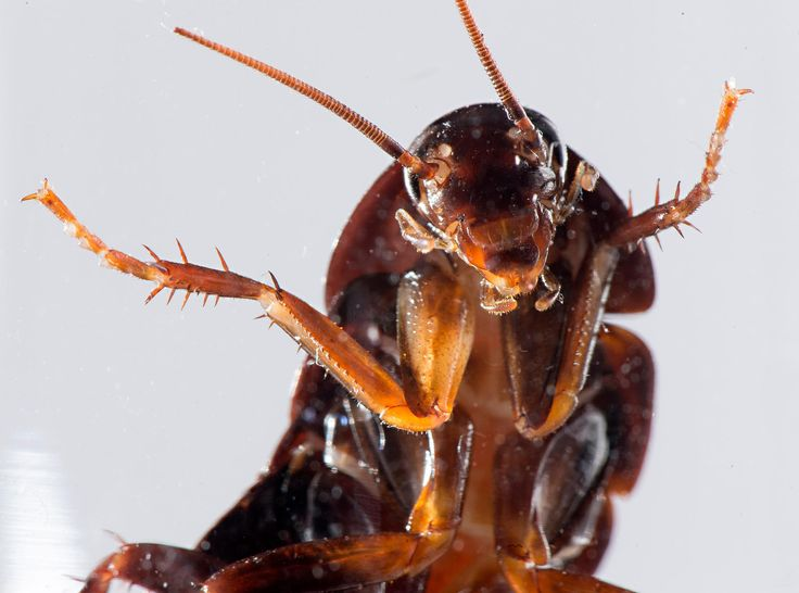Get rid of cockroaches for good exterminator reveals