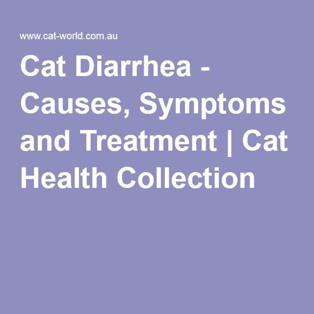 Best 25 Cat Diarrhea Ideas On Pinterest Funny Kittens