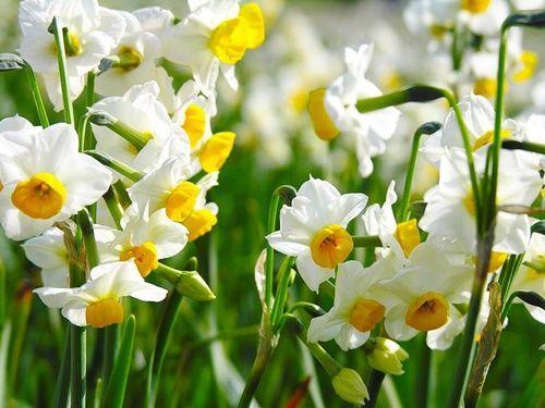 Virágok: nárciszok,Virágok: nárciszok,Gyönyörű tulipánok és jácintok,Gyönyörűséges krókuszok,Jácintok és más tavaszi virágok,Gyönyörű kék jácintok,Gyönyörű rózsák,Gyönyvirágcsokor vázában ,Gyönyörű virágcsokor,Csodaszép virágkosár, - jpiros Blogja - Állatok,Angyalok, tündérek,Animációk, gifek,Anyák napjára képek,Donald Zolán festményei,Egészség,Érdekességek,Ezotéria,Feliratos: estét, éjszakát,Feliratos: hetet, hétvégét ,Feliratos: reggelt, napot,Feliratos: egyéb feliratok ,Finomságok…