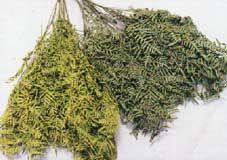 Métodos para secar flores, hojas y ramas.