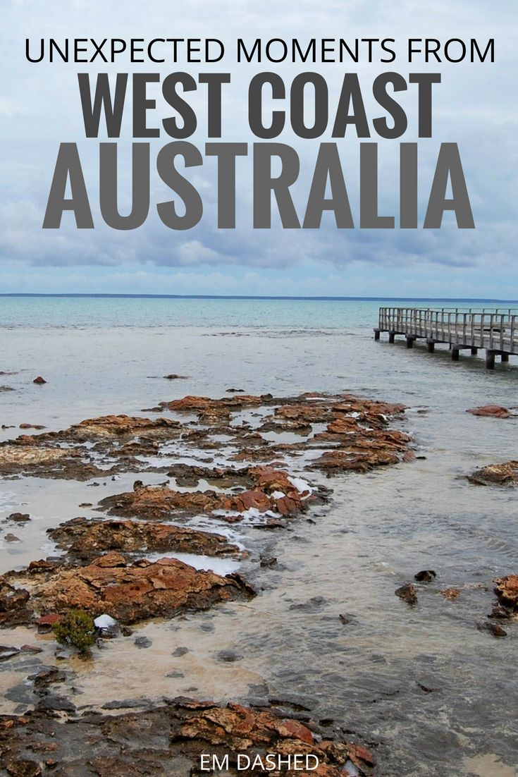 Echidnas and dolphins and pelicans: oh my! Unplanned, unexpected, and unforgettable wildlife encounters from a road trip along Australia's west coast. | #WesternAustralia