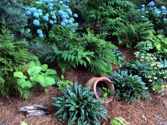 For those who love hostas or hydrangeas... #FGgpod #FineGardening