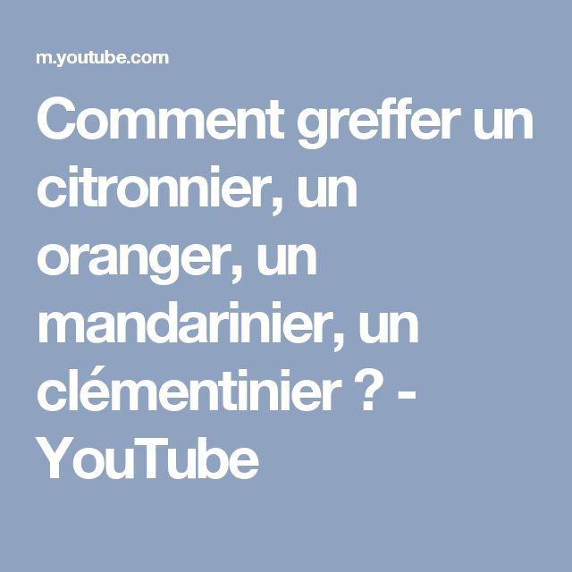 Comment greffer un citronnier, un oranger, un mandarinier, un clémentinier ? - YouTube