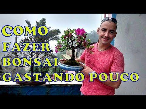 COMO FAZER BONSAI COM POUCO DINHEIRO