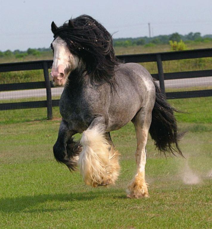 de caballos