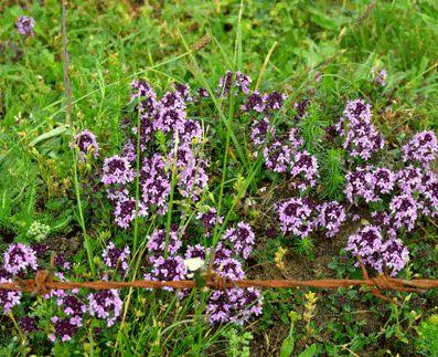 FIBROMIALGIA: Tratamiento de los hongos Cándida