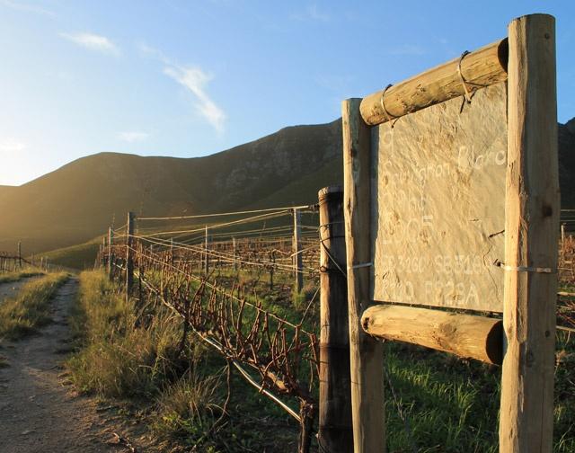 Wijngaarden in Zuid-Afrika Hermanuspietersfontein boerderij