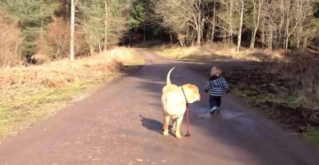 Hond wacht rustig terwijl baasje in een plas speelt