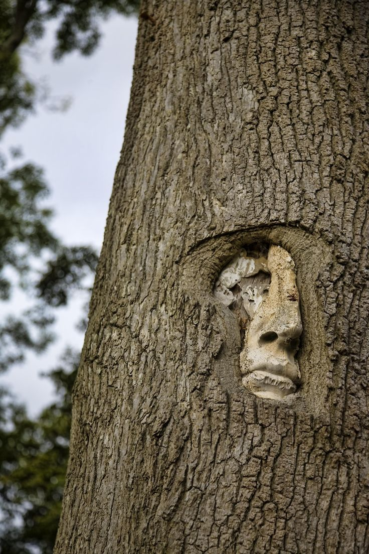 All sizes | tree people | Flickr - Photo Sharing!