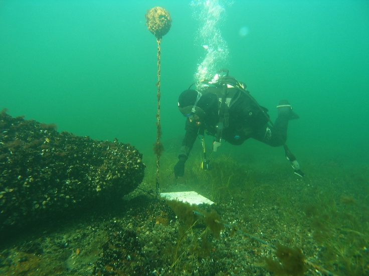Deep diving by the underwater trail in Archipelago PAN Park / Photo: ANP Archives