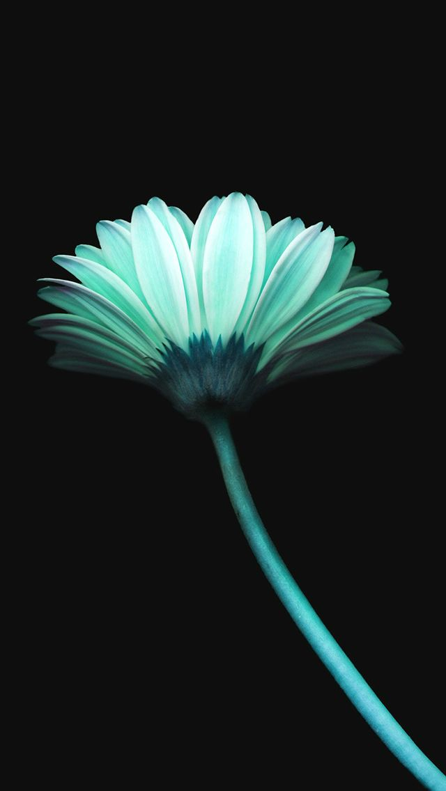 Lonely Flower Dark Blue Simple Minimal Art Iphone 5s Wallpaper Iphone 5se Wallpapers In 2018 Pinterest Wallpaper Iphone Wallpaper And Iphone