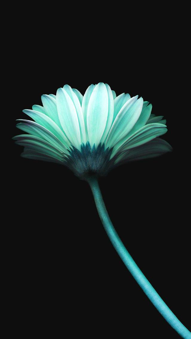 Lonely Flower Dark Blue Simple Minimal Art #iPhone #5s# wallpaper