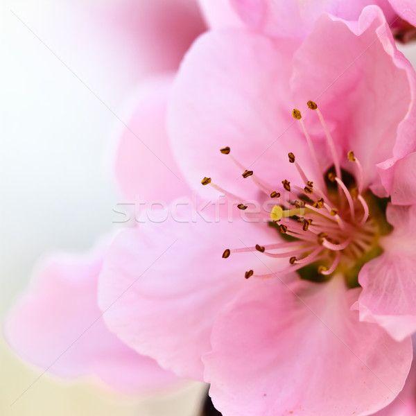 882565_voorjaar-bloemen-roze-hemel-bloem-boom.jpg (600×600)