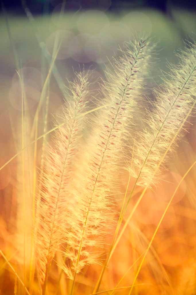 Grass Soft Sunlit Glow
