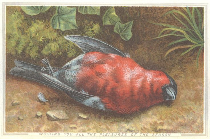 Image result for dead bird christmas card