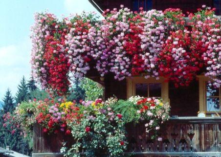 Las mejores plantas para el balcón