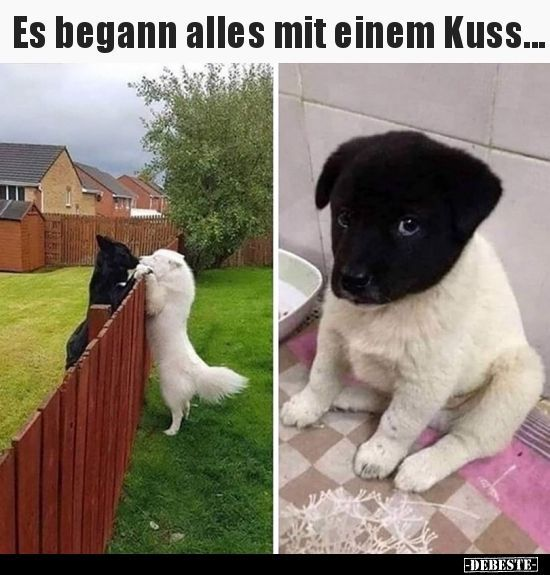 It all started with a kiss      Funny pictures say #animal_humor #Funny #jokes #…
